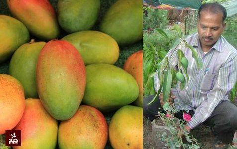 Mango season all year long! Kota farmer develops mango variety to bear fruits entire year